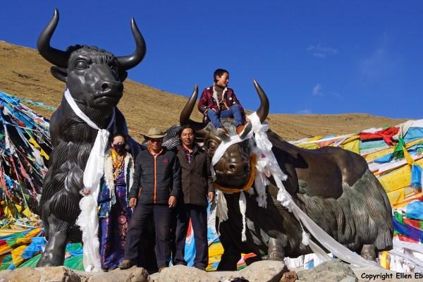 Statues of yaks at the Pa La pass (5031m)