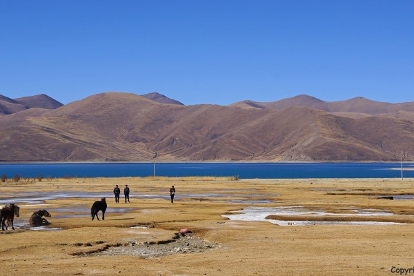 Horses on the shore of Yamdrok Tso Lake