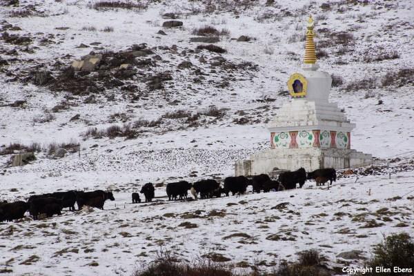 Stupa yaks Derge