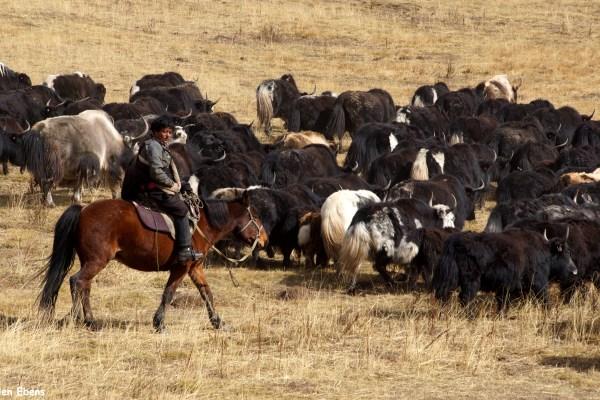 yaks Tangke