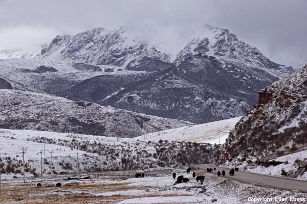 Yushu Nangchen landscape yaks