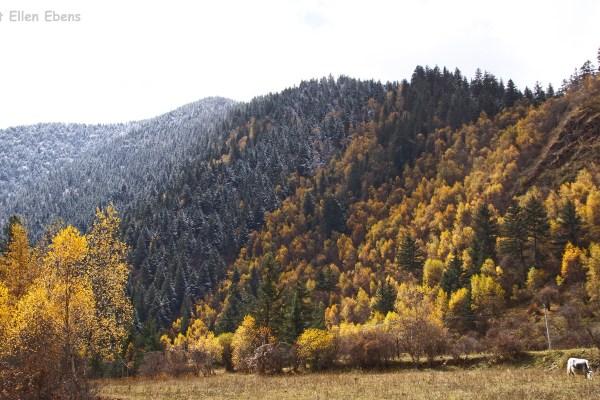 Songpan autumn colors