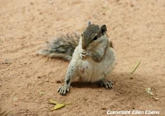 Squirrel at the temple complex at Khajuraho