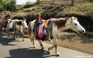 Semi-nomads on their way with their cattle and their children