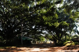 Street with big trees at Pindaya