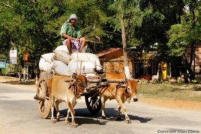 Local transport on the road from Bagan to Pyay