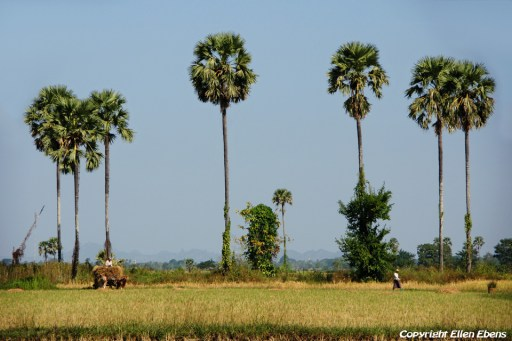The countryside near Pyay