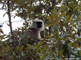 Bhutan monkey