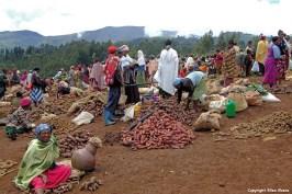 Market Chencha