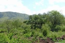 Ethiopia Mago landscape