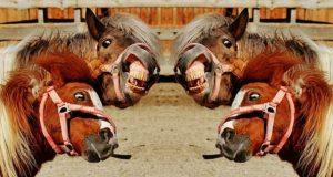 debate a cuatro caballos