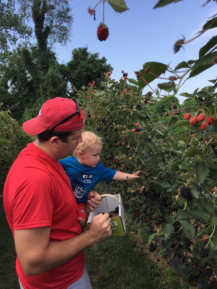 Blackberry and Peach Picking Time | Ellie And Addie