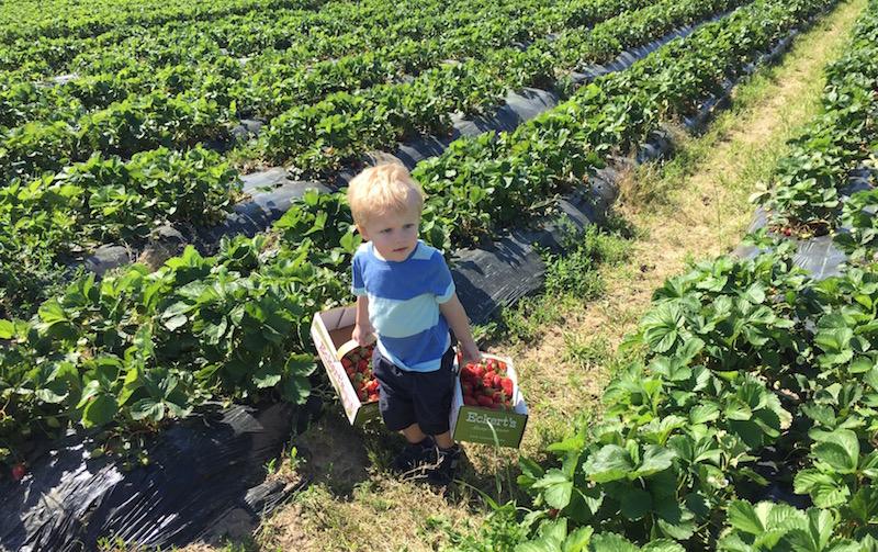 Strawberry Fields Forever | Ellie And Addie