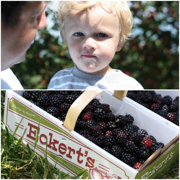 Blackberry Adventures at Eckert's | Ellie And Addie
