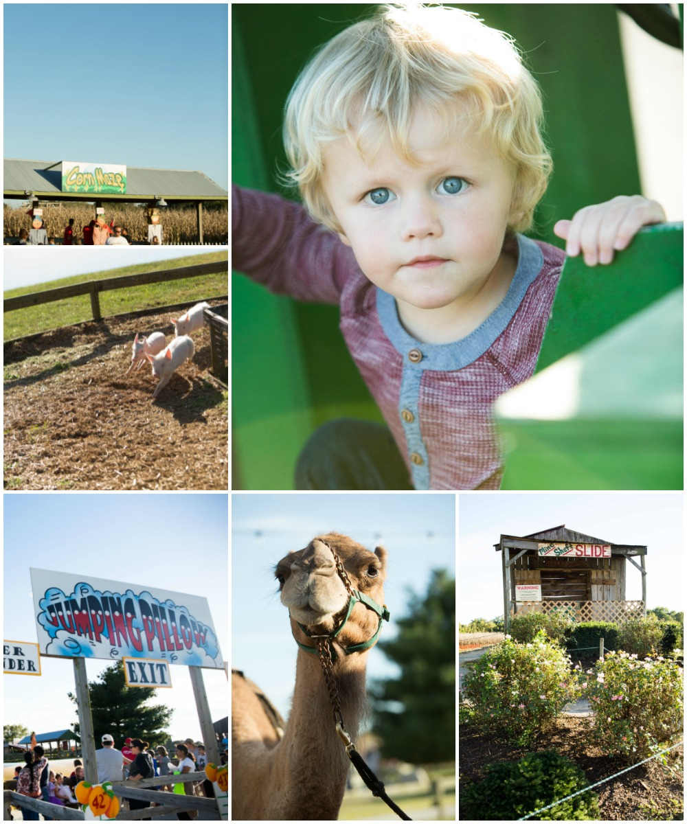 Fall at the Farm - Eckert's Millstadt | Ellie And Addie
