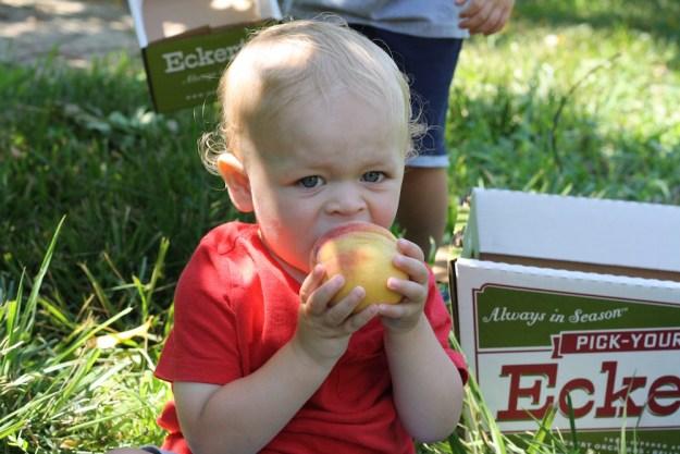 Peach Picking at Eckert's | Ellie And Addie