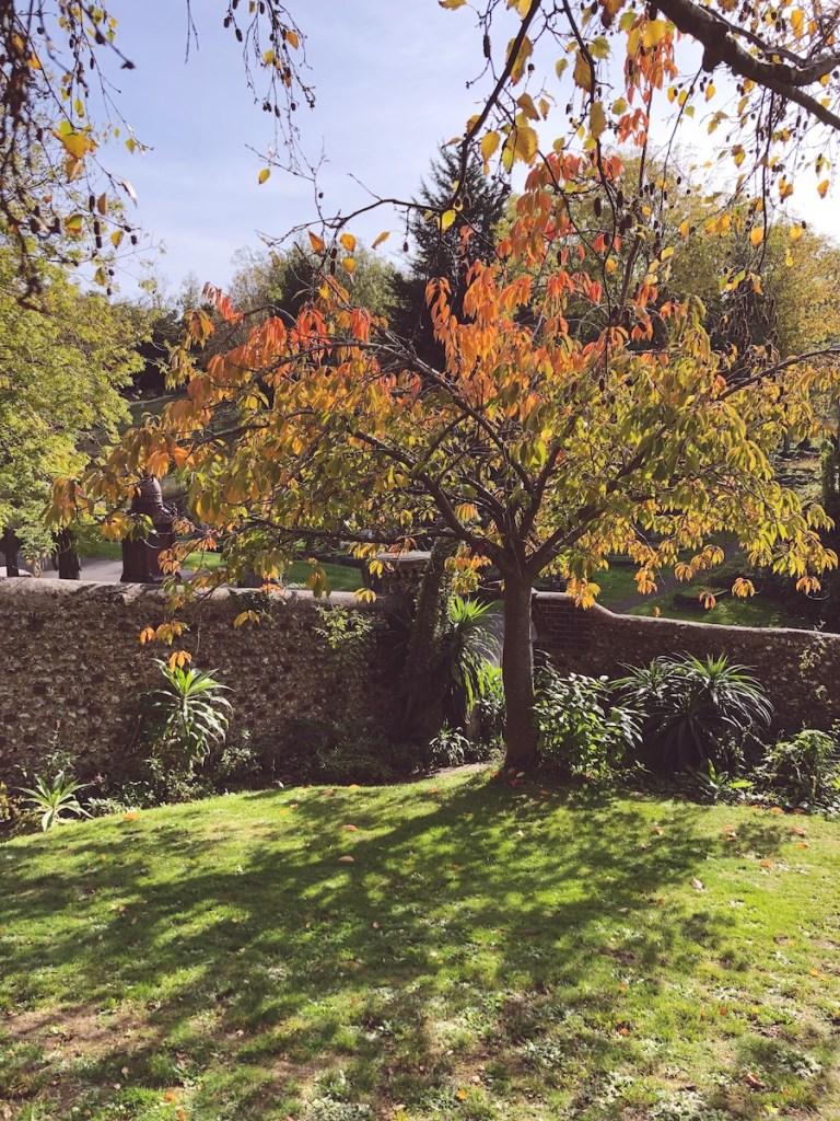 picnic garden woodvale cemetery brighton
