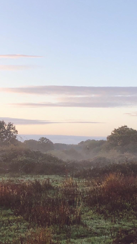 dawn safari at knepp wildland
