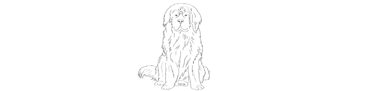 newfoundland dog illustration