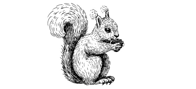 "Squirrel illustration - ""What Does He Have?"" Microfiction"