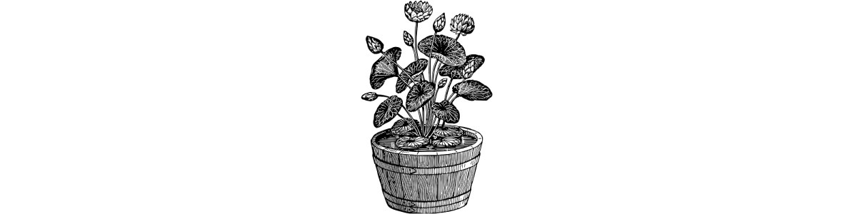 "Plant pot illustration - ""A Character"" microfiction"