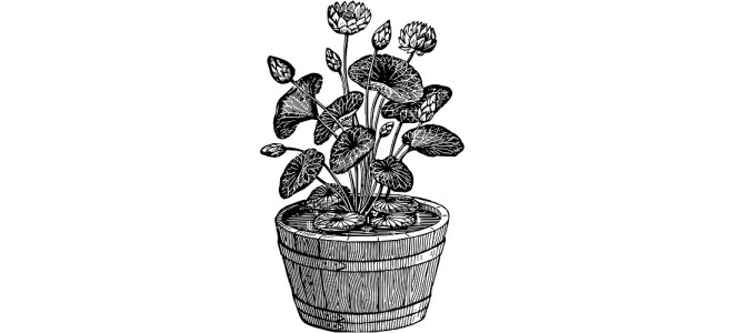 "Plant pot illustration - ""A Character"" microfiction"