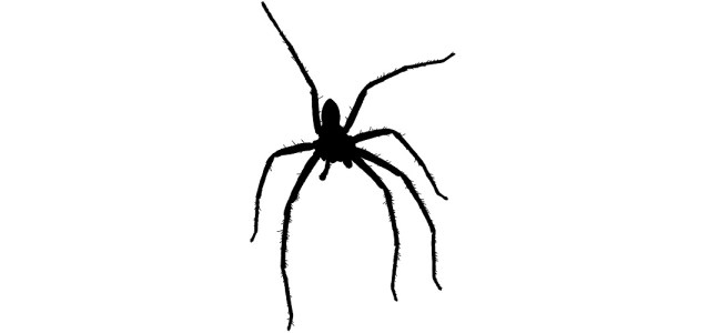 "Hairy spider silhouette - ""Trick"" microfiction"