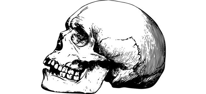 "Human skull illustration - ""Better Run"" microfiction"