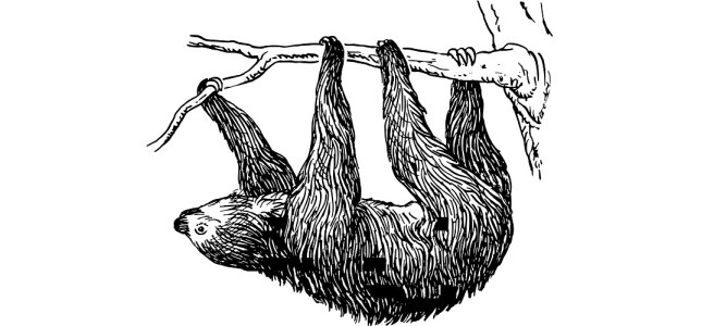 "Illustration of a sloth hanging from a branch - ""Hang In There!"" flash fiction"
