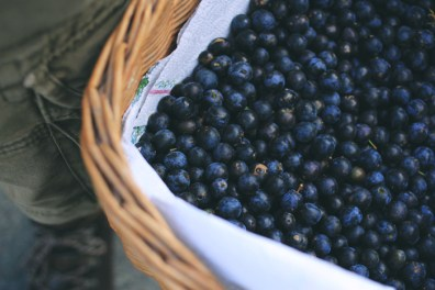 sloes4
