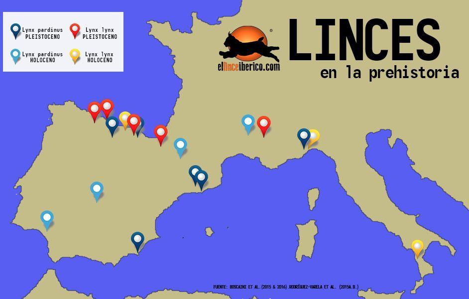 Fosiles_linces_lynx