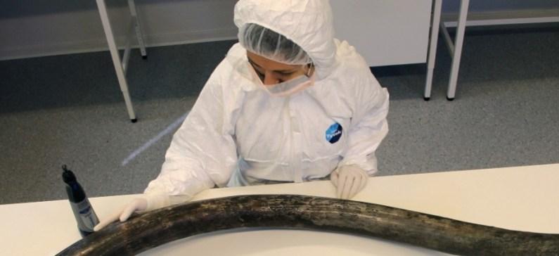 Ελληνίδα ρίχνει φως στο DNA των αρχαίων ελεφάντων και στην εξέλιξή τους