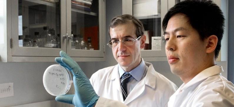 """Έλληνας ερευνητής ανακάλυψε νέο αντιβιοτικό που μπορεί να καταστρέψει τα  """"superbugs"""""""