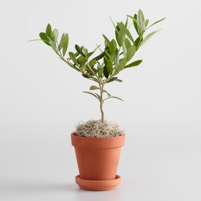 plant box ellines 8