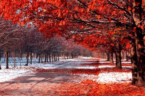 First Snowfall, Maple Orchard, British Columbia, Canada