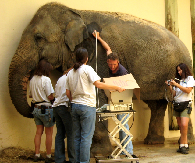 Do You Want To Be A Zoo Vet National Zoo Veterinary