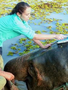 Karla-Nova-bathing-young-elephant