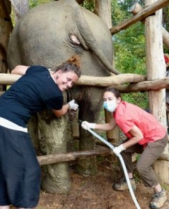 elephant-hydrotherapy-veterinarian