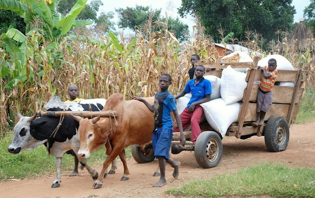 children-with-oxen-cart-Uganda