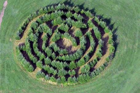 Hedge-Maze