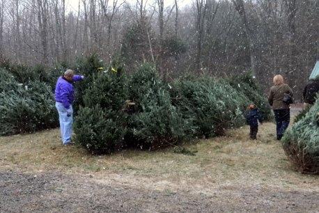 Pick your own Christmas tree near saratoga