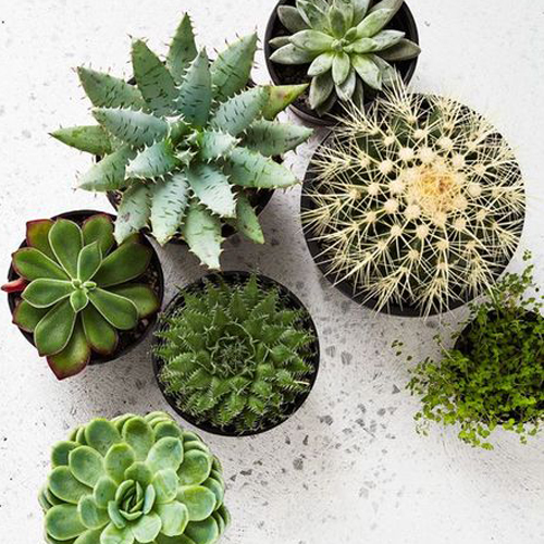 SUCCULENT STYLING