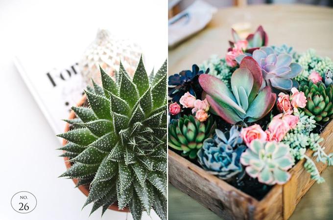 succulent cactus interior design styling www.ellymacdonalddesign.com0