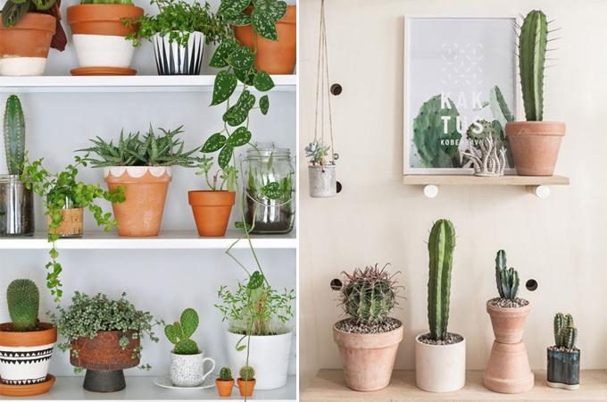 succulent cactus interior design styling www.ellymacdonalddesign.com4