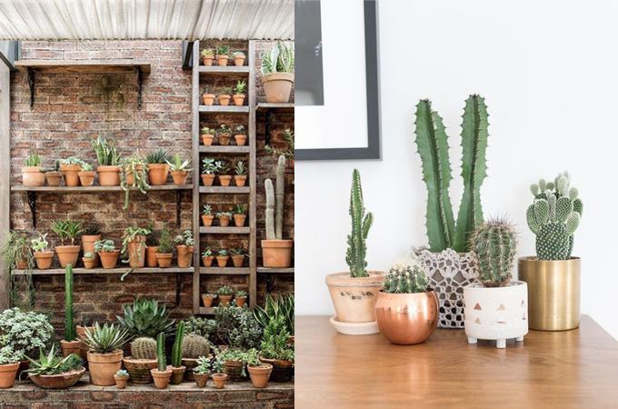 succulent cactus interior design styling www.ellymacdonalddesign2