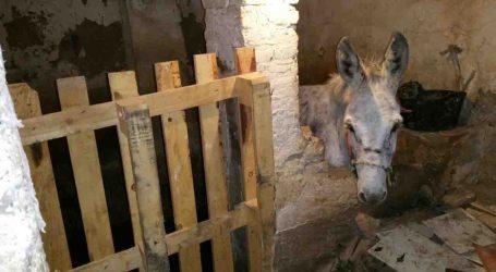 La Policía Local de Burjassot decomisa un burro encontrado en malas condiciones