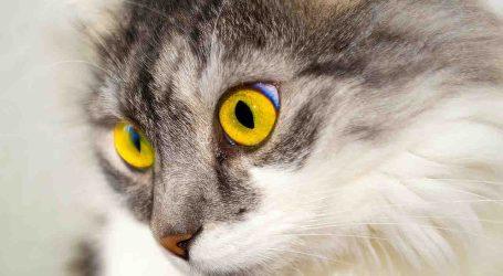 Compromís per Torrent, preocupado por la superpoblación de gatos
