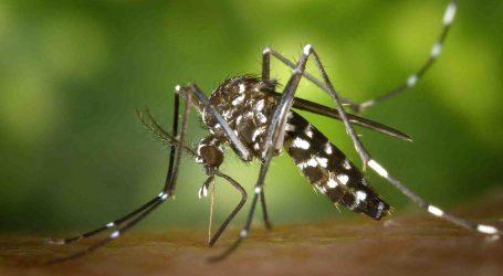 Precauciones por la presencia del mosquito tigre en cementerios tras Todos los Santos