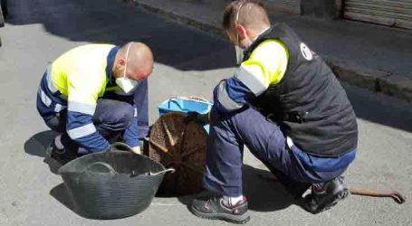 Alfafar trabaja durante todo el año por la prevención y control de plagas en el municipio