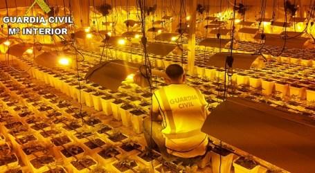 La Guardia Civil incauta 1250 plantas de marihuana en un nave de Picanya
